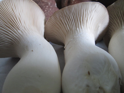 Mushroom Farming in South Africa | Funguys Gourmet