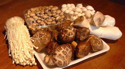 Mushroom Spawn and Culture kit