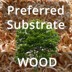 Preferred mushroom substrate